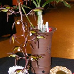 2008-Autumn-East-Rand-Orchid-Show-01