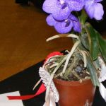 2008-Autumn-East-Rand-Orchid-Show-03