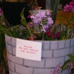 2008-Autumn-East-Rand-Orchid-Show-04