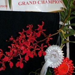 2009-Autumn-East-Rand-Orchid-Show-01