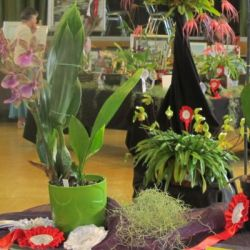 2010-Autumn-East-Rand-Orchid-Show-01