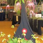 2010-Autumn-East-Rand-Orchid-Show-03
