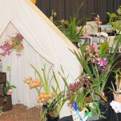 2010-Spring-East-Rand-Orchid-Show-01