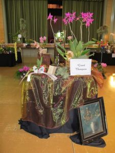 2011-Autumn-East-Rand-Orchid-Show-01