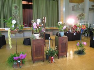 2011-Autumn-East-Rand-Orchid-Show-02