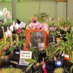 2011-Autumn-East-Rand-Orchid-Show-04