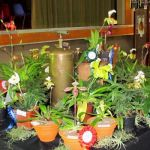 2011-Autumn-East-Rand-Orchid-Show-05