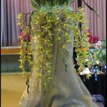 2012-Autumn-East-Rand-Orchid-Show-01