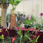 2012-Autumn-East-Rand-Orchid-Show-04