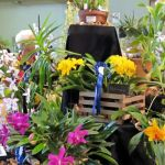 2012-Autumn-East-Rand-Orchid-Show-05