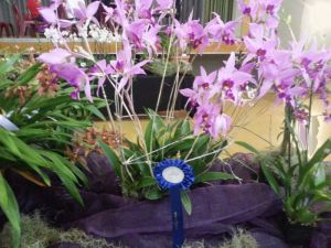 2013 Autumn East Rand Orchid Show 01