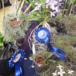 2013 Autumn East Rand Orchid Show 05