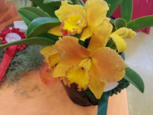 2013 Autumn East Rand Orchid Show 28