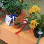 2013 Autumn East Rand Orchid Show 29