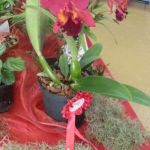 2013 Autumn East Rand Orchid Show 33