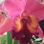 2013 Autumn East Rand Orchid Show 34