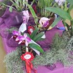 2013 Autumn East Rand Orchid Show 36