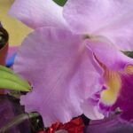2013 Autumn East Rand Orchid Show 38