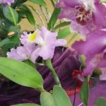 2013 Autumn East Rand Orchid Show 39