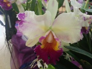 2013 Autumn East Rand Orchid Show 41