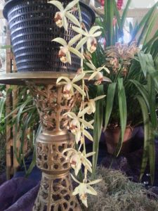 2013 Autumn East Rand Orchid Show 48