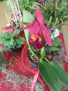 2013 Autumn East Rand Orchid Show 60