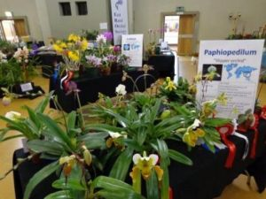 2013 Spring East Rand Orchid Show 03