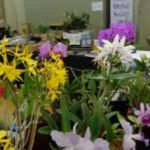 2013 Spring East Rand Orchid Show 04