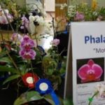 2013 Spring East Rand Orchid Show 05