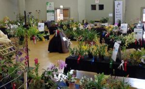 2013 Spring East Rand Orchid Show 06