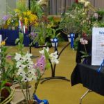 2013 Spring East Rand Orchid Show 07