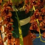 2013 Spring East Rand Orchid Show 14